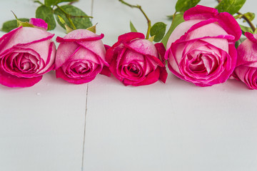 Five purple roses with drops on white wooden background with copy space