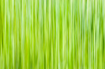 Natural background - vertical lines in yellow-green shades