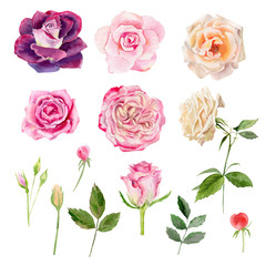 Set of watecolor roses clipart