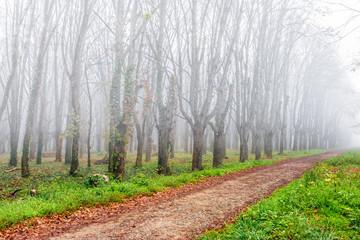 autumn park in fog