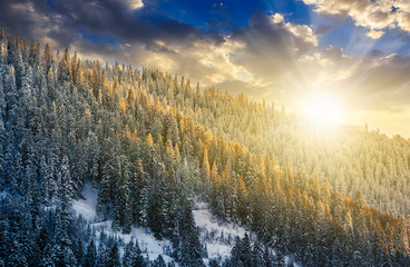 magnificent forest in winter mountains at sunset