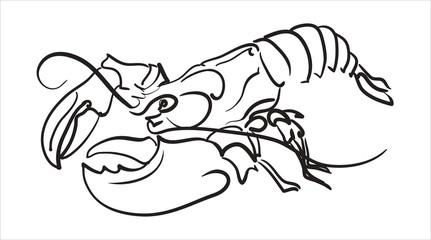Lobster hand drawn vector