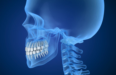 Transparent scull and teeth , xray view . 3D illustration .