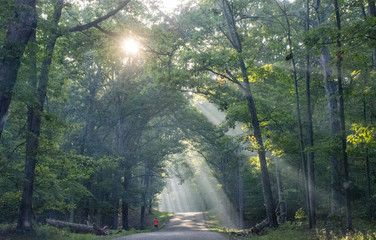 Sunlight through trees on a country road with jogger, Fredericksburg National Battlefield Park, Virginia