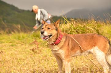 飼い犬(雑種)