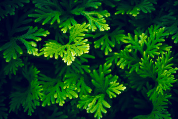 Green plant nature
