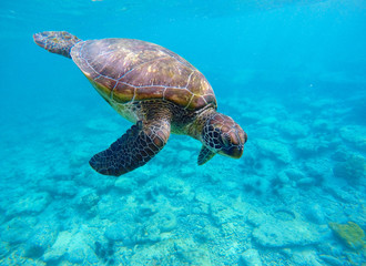 Underwater photo with sea turtle and text place