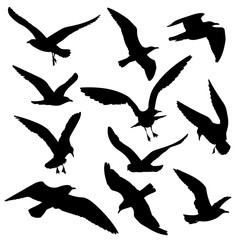 Flying birds black silhouettes vector set