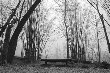 lonely bench in a forest