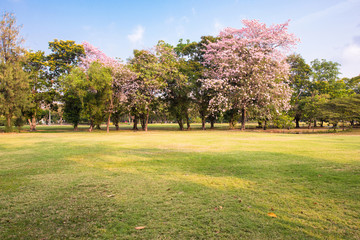 Beautiful lawn and green park landscape with pink flowers on tree in autumn