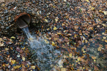 Water flows from the pipe. Around the small stones and yellow leaves