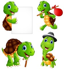 Set of funny turtle on a white background