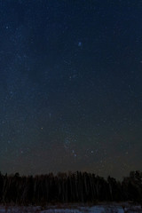 sky star forest panorama
