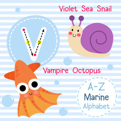 V letter tracing. Violet Sea Snail. Vampire Octopus. Cute children sea marine alphabet flash card. Funny cartoon animal. Kids abc education. Learning English vocabulary. Vector illustration.