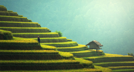 Rice fields on terraced of Mu Cang Chai, YenBai, Vietnam. Rice fields prepare the harvest at Northwest Vietnam.Vietnam landscapes