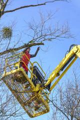 Baumpfleger im Einsatz auf der Hebebühne