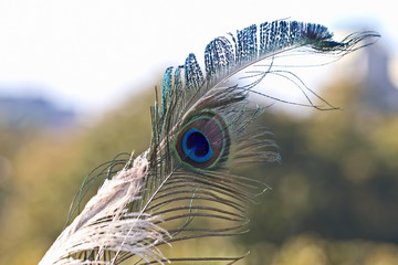 peacock feather on soft background