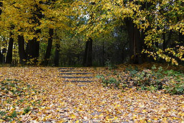yellow fallen leaves in autumn park