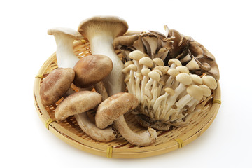 きのこの集合 Japan mushrooms set
