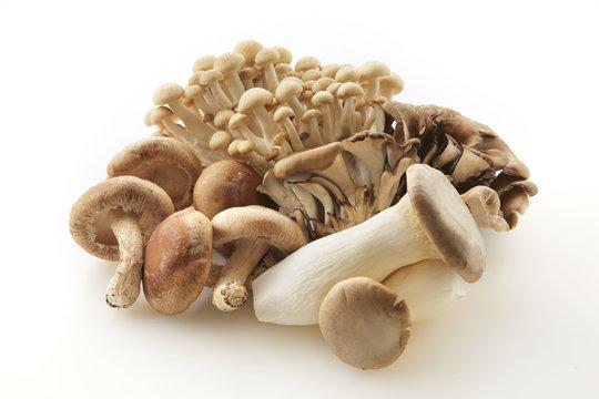きのこの集合 Japan mushrooms set