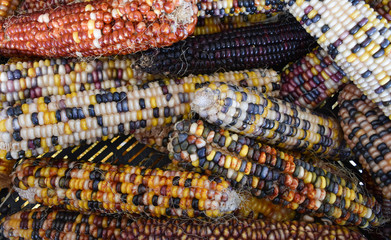 Colorful corn at the farmers market