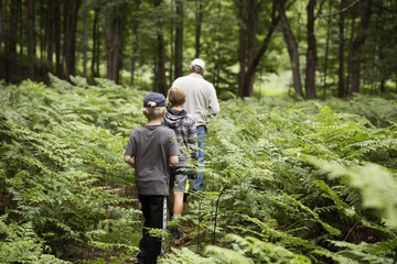 Rear view of grandfather and grandsons walking in forest