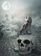 Halloween mystical landscape with skull and owl