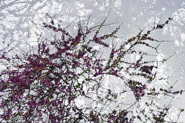 Double Exposure branch of a tree with flowers, taken with the camera