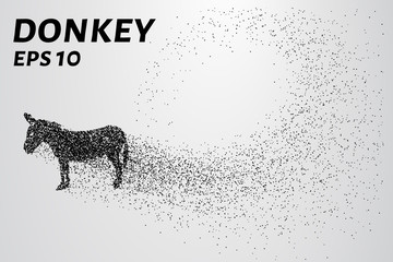 Donkey of the particles. The donkey is made up of little circles. Vector illustration