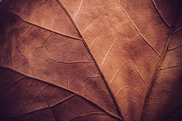 Autumn leaf macro texture