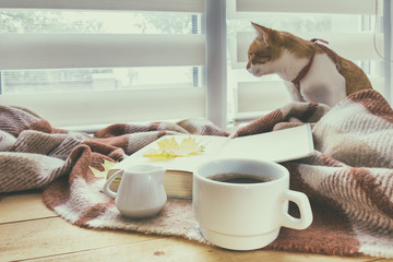 Cup of coffee, book with autumn yellow leaf and red-white cat surrounded wool blanket on windowsill. Cup of coffee book with autumn yellow leaf and red-white cat surrounded wool blanket on windowsill