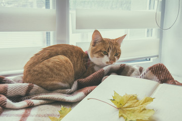 Book with autumn yellow leaf and red-white cat surrounded wool blanket on windowsill. Cup of coffee book with autumn yellow leaf and red-white cat surrounded wool blanket on windowsill