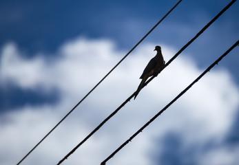 Bird between the wires
