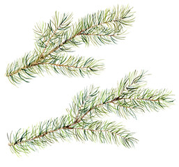 Watercolor Christmas tree branches set. Hand painted illustration with fir-needle natural elements isolated on white background. Winter natural element for design, print or background.