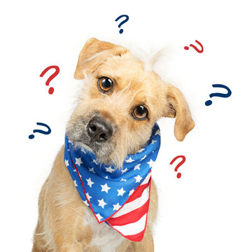 Confused Political American Dog