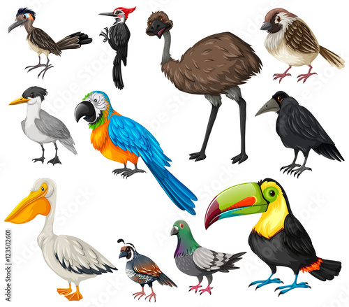 """""""Different types ... Different Kinds Of Birds"""