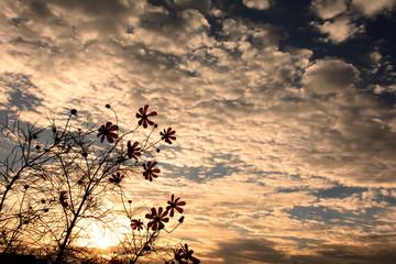 コスモスの花と秋の空