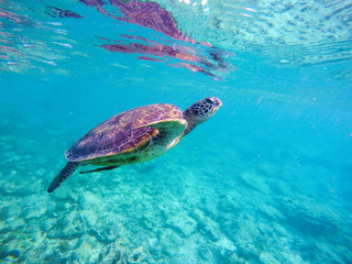 Underwater image of sea tortoise for banner template with text place