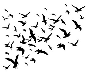 Flying birds flock vector illustration isolated on white background