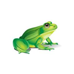 pretty realistic frog