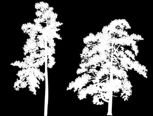 two white large pine silhouettes on black