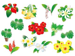 ハワイの植物いろいろ