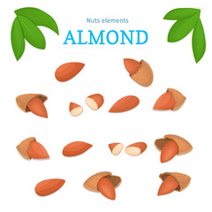Vector set of nuts. Almond nut whole, peeled, piece of half, walnut in shell, leaves. Collection of walnut nuts designer elements for use in packaging design projects flyer healthy eating
