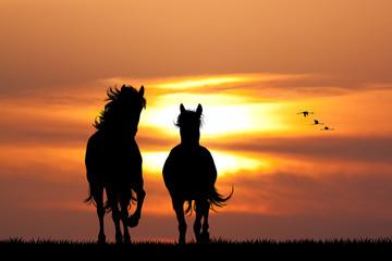 galloping horses at sunset