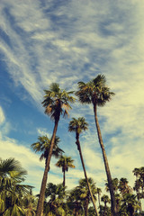Palm trees on the background of a beautiful sky