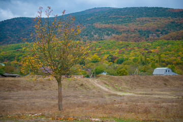 Autumn season in Russia Lonely beautiful  tree.  Landscape.