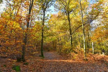 Sentiero in mezzo alla foresta autunnale