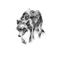 sketch drawing of a wolf on  white background
