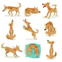 Brown Dog Set Of Normal Activities