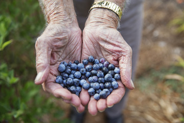 Cropped image of man with blueberries